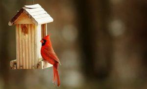 die besten Tipps zum Vogelhäuschen kaufen
